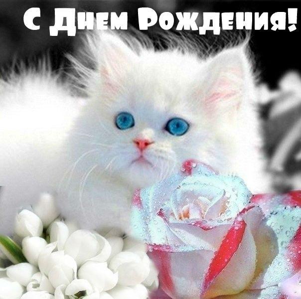С Днем Рождения! Котик поздравляет
